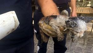Boruya sıkışan yavru kedi böyle kurtarıldı