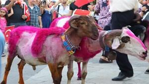 İspanya boğa güreşlerinin alternatifi: Sudan Koyun Geçirme
