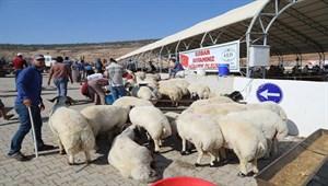 Hayvan pazarında bayram yoğunluğu başladı