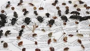 10 yılda 100 bin böcek toplayarak 'Böcek Müzesi' yaptılar