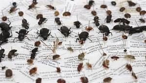 10 yılda 100 bin böcek topladılar